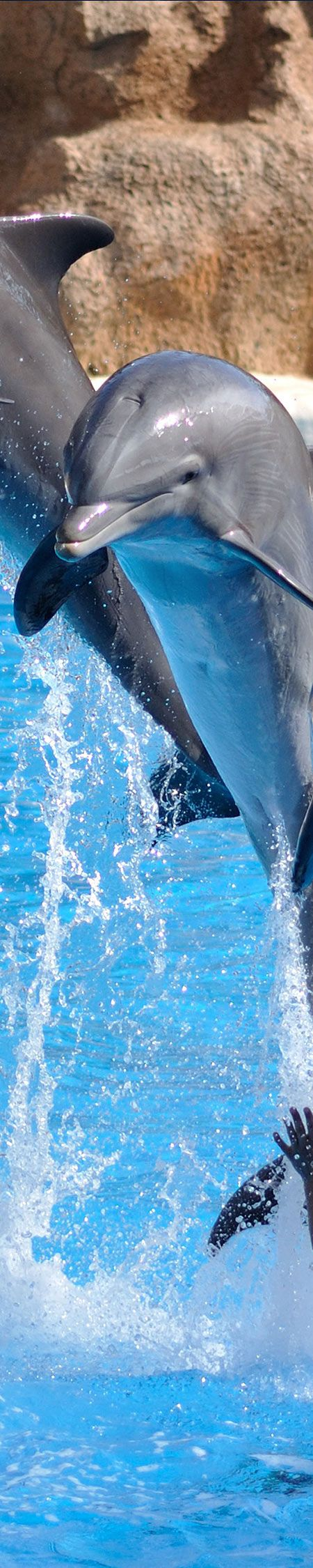 """Dolphins (I realize that some of my """"Sweet Fuzzies"""" are not exactly fuzzy, lol!)"""
