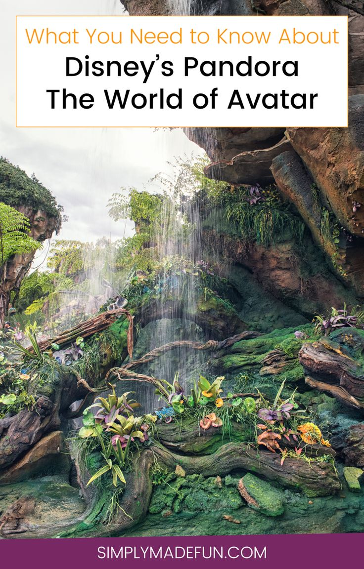 Disney's Pandora the World of Avatar - I've never liked Disney's Animal Kingdom but I am obsessed with Pandora. Flight of Passage is one of the the best rides at Disney World, and I'm sharing a few simple tips on how not to wait in those ridiculous long lines during your Disney vacation!