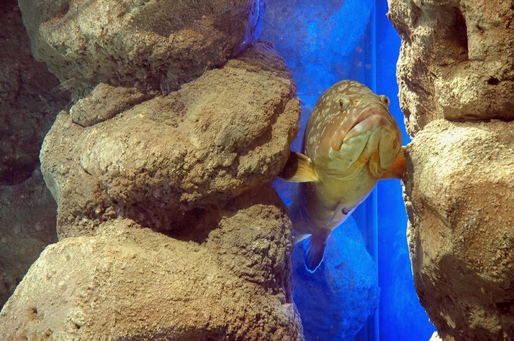 Thalassocosmos aquarium, Gournes, Heraklion Crete, Greece.