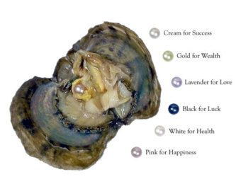 Pick A Pearl Oyster Kit Freshwater Pearl Wish Pearl by AOSDESIGN