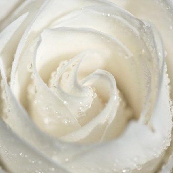 Natur Fotografie Makro romantische Art Frühling weiß Hochzeit Dekoration für ihre Frauen Creme schäbige schicke romantische Liebe Blume Rose Wasser Tropfen Regen