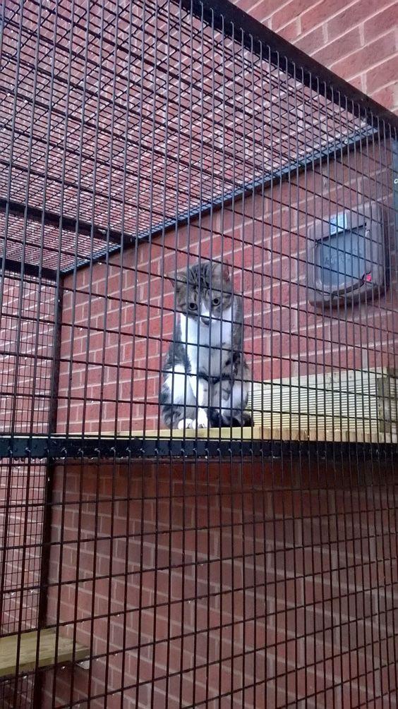 Best 25 Cat Run Ideas On Pinterest Catio Ideas For Cats