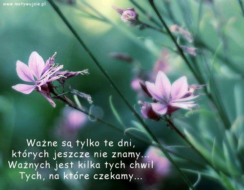 Ważne :) | www.MotywujSie.pl