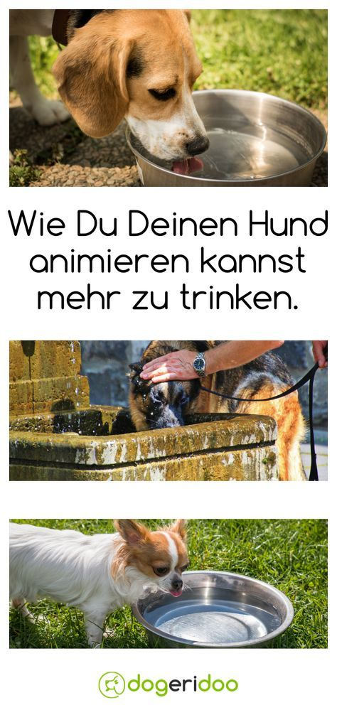 Okay, Trinken ist nicht direkt Ernährung, aber auch sehr wichtig. Einige Hunden trinken viel zu wenig - und das hier kann die Lösung sein.