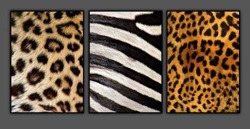 cuadros-poster-animal-print-zebra-leopardo-decoracion-mueble_MPE-O-3450951536_112012.jpg 500×258 píxeles:  Panthers,  Panthera Onca, 500 258, De Animal, Animal Prints, Animal Salvage, Animalprint Hom,  Feli Onca, Animales Prints