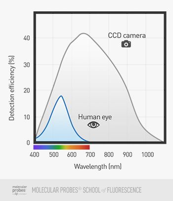 diagram comparing light detection capabilities of the human eye with those of a CCD camera