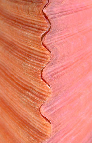 #coral #rojo Color Malibu. Ron de coco Malibu
