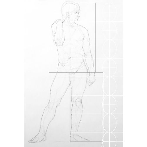Width of the Hips, Proportions diagram image