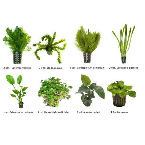 Plantas medicinales para adelgazar rapidamente em