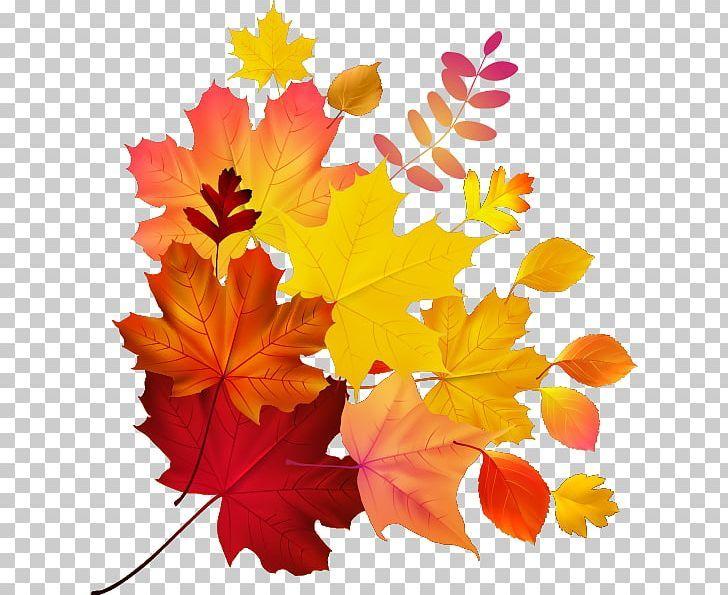 Autumn Leaf Color Maple Leaf Png Autumn Autumn Leaf Autumn Leaf Color Euclidean Vector Fall Autumn Leaf Color Leaf Art Leaf Coloring