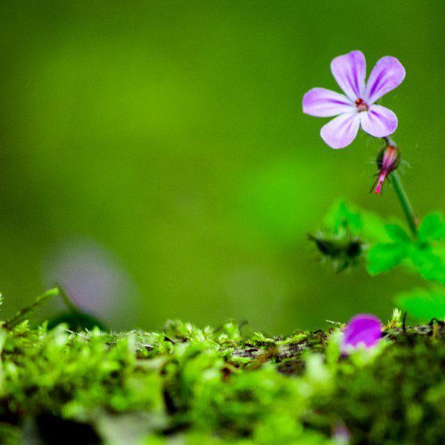 #photographyeveryday  #photography #photo #photographer #travel #UK #flower #flowers #wildflowers #creswell #sun #summer #sunshine #photooftheday #pro #professional #sigma #nikon #macro #micro #closeup #purple #colour #art #feather #NationalTrust