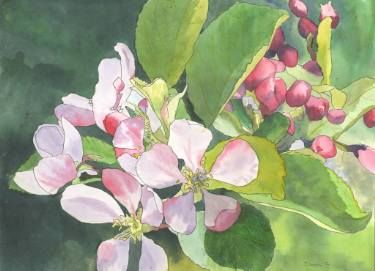 Apple Blossom 2