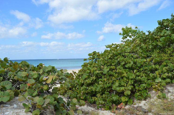 Isole Cayman, Seven Mile Beach, Grand Cayman