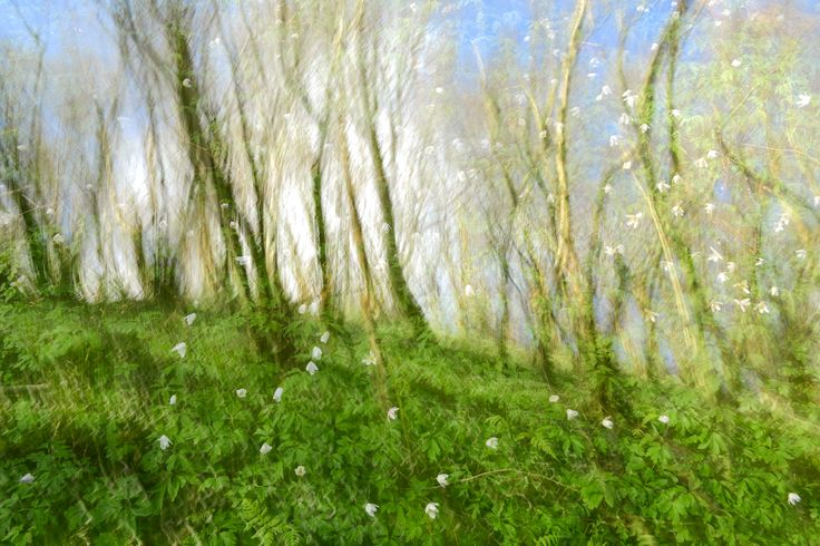 Fotokursus - Nature Abstract - Kreativ fotografering med Morten Hilmer