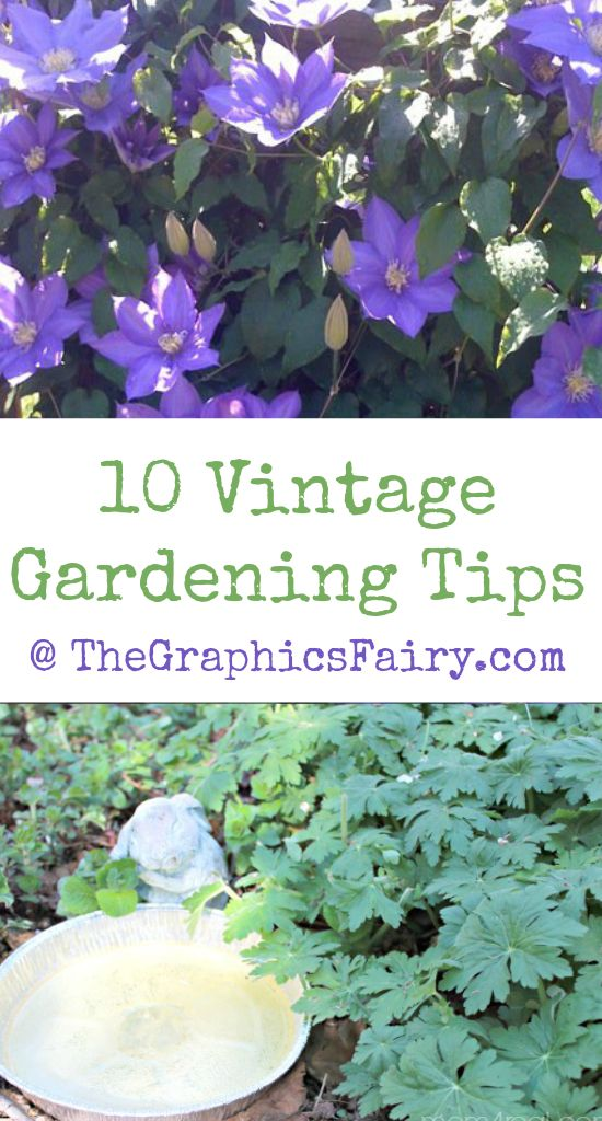 10 Vintage Gardening Tips! Graphics Fairy. Great old fashioned tips for a better Garden!