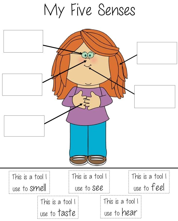 5 senses diagram! Great idea for visual learners!