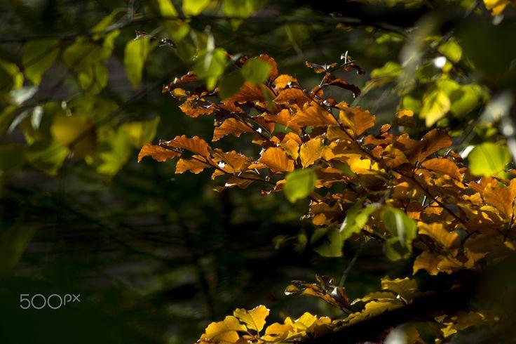 Autumn beauties - null