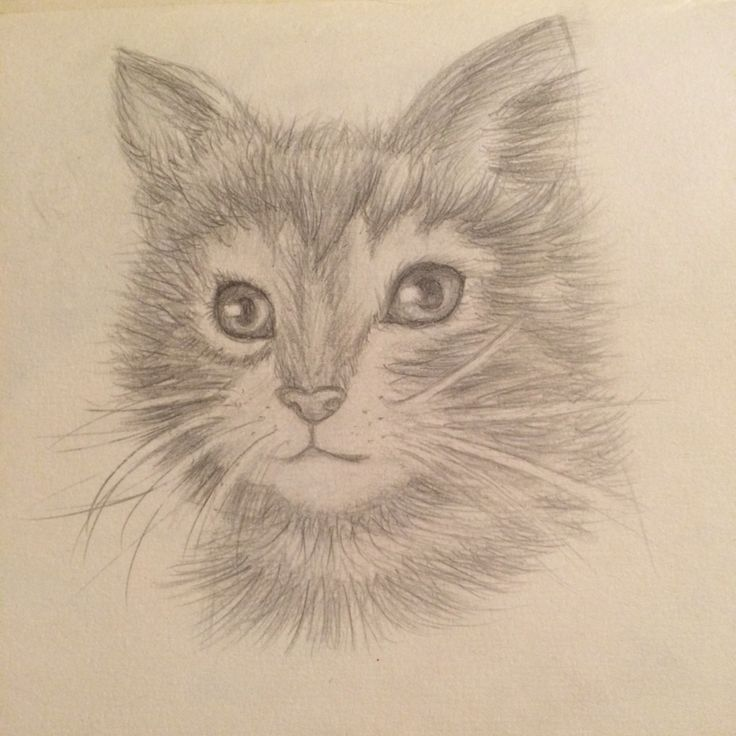 Kitten pencil drawing