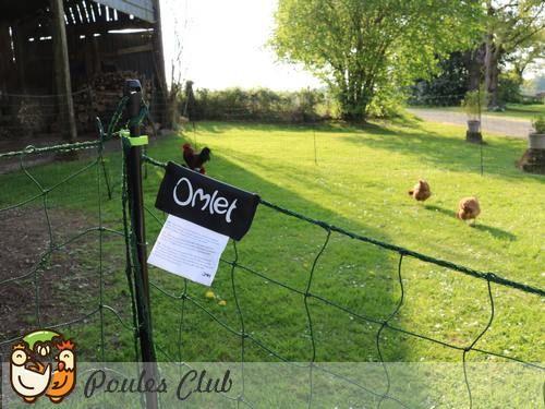 Filet poules 32 mètres Omlet