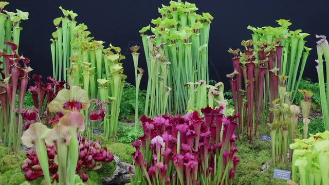 5. So this was Oliver Jennings project that gained recognition from The Creators Project and also an award at the RHS Chelsea Flower Show. This was performed live at MIRA 2014, but is now almost a stock performance.