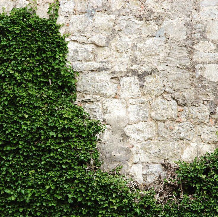 Just a simple wall-photo  . . . #travelcommunity #timeoutsociety #welivetoexplore #teamwanderlust #wearetravelgirls #wonderful_places #beautifuldestinations #exceptional_pictures #speechlessplaces #travel_drops #igerseurope #travelblogger #germany #würzburg #festungmarienberg