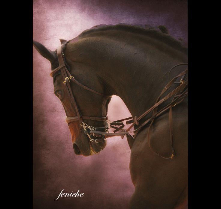 los mejores caballos del mundo 3