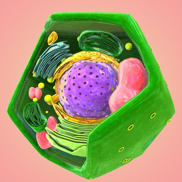 3D Vegetal Cell Model - 3D Model