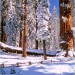 Sequoia and Kings Canyon National Parks lie side-by-side in the southern Sierra Nevada, east of the San Joaquin Valley.