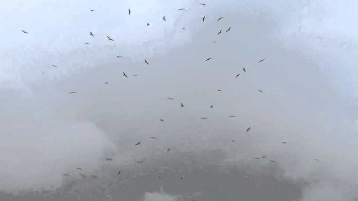Birds Circling