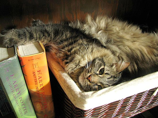 Kitteh loves Harry too! :) awwwwwwwwww: Potter Cat, Kitty Cat, Cutest Things, Cat Interiors, Baskets, Harry Potter Books, Cat Reading, Animal, Cat Lady