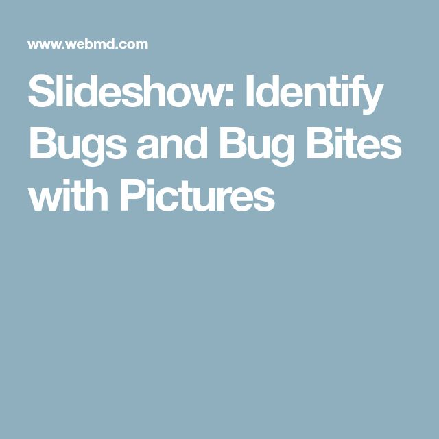 Slideshow: Identify Bugs and Bug Bites with Pictures