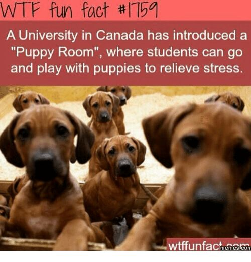 Image result for Canadian facts memes