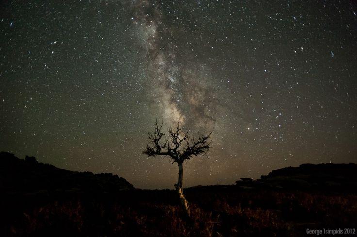 PHOTO ΙΚΑΡΙΑ: Ένα δέντρο κοιτάει τα άστρα!   ikariamag.gr