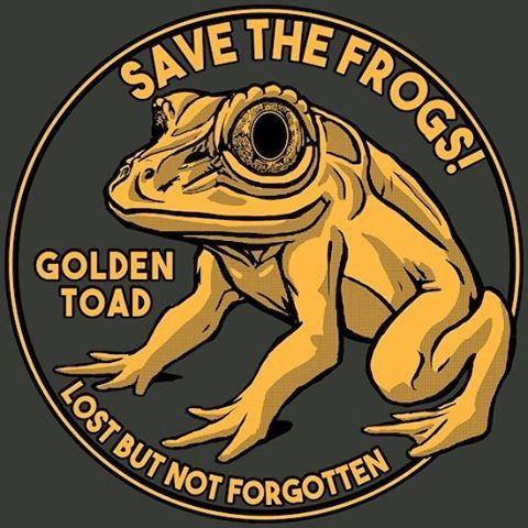The Golden Toad: A Sober Reminder of the Amphibian Extinction Crisis  This design available on shirts this week only at www.float.org ($8 of every shirt will be donated to SAVE THE FROGS! conservation programs)  The golden toad (Incilius periglenes, formerly Bufo periglenes) was a small toad that was from a small, high-altitude region north of the city of Monteverde, Costa Rica. An endemic species, it could only be found in pristine cloud and elfin forest. The golden toad was first described…