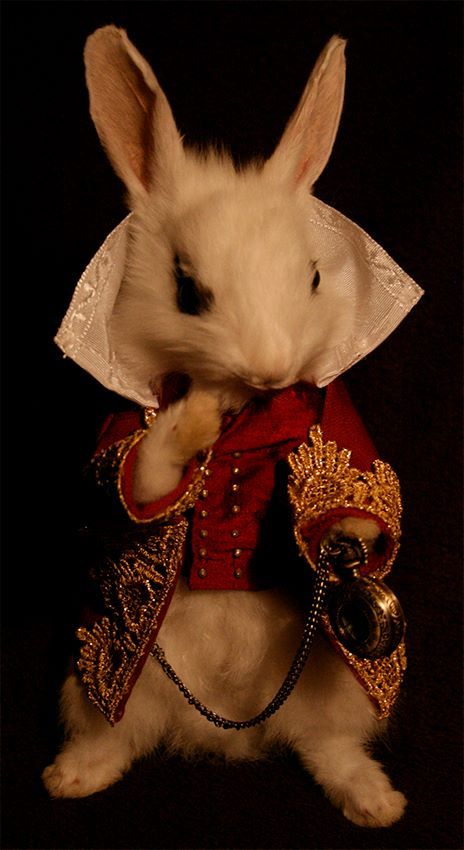 alice in wonderland taxidermy | Alice in Wonderland White Rabbit ~ £290