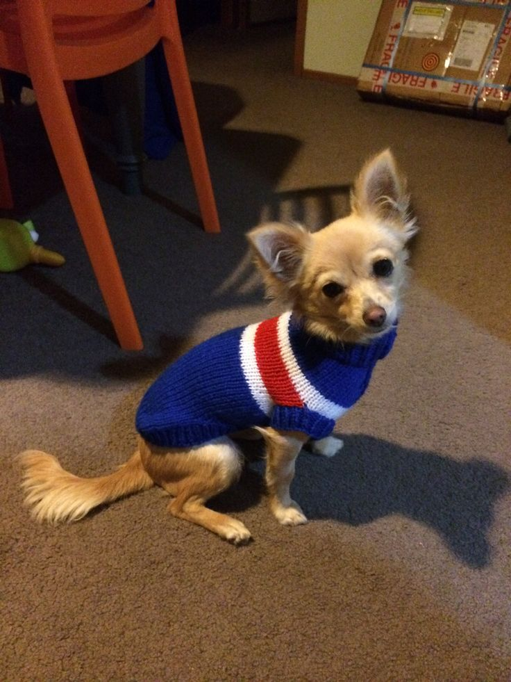 My dog Cher is loving her new woolen coat, that my friend knitted for her