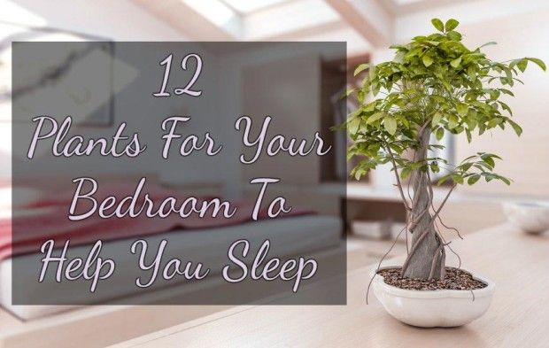This 12 Bedroom Plants Will Help You Sleep Well