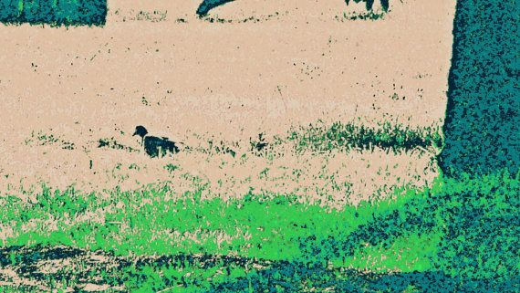 Ducks in the Grass Digital Artwork Canvas by BlackbirdArtDesign