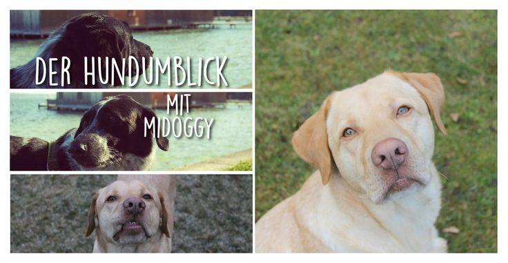 Der Hundumblick: 6 Fragen an Jette von Labrador Smokie