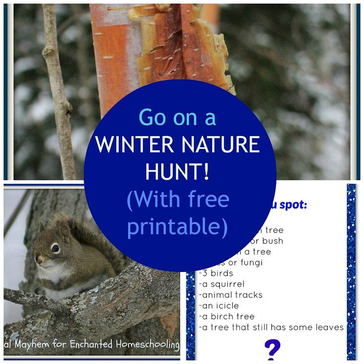 Free printable nature hunt {The Usual Mayhem on Enchanted Homeschooling Mom}