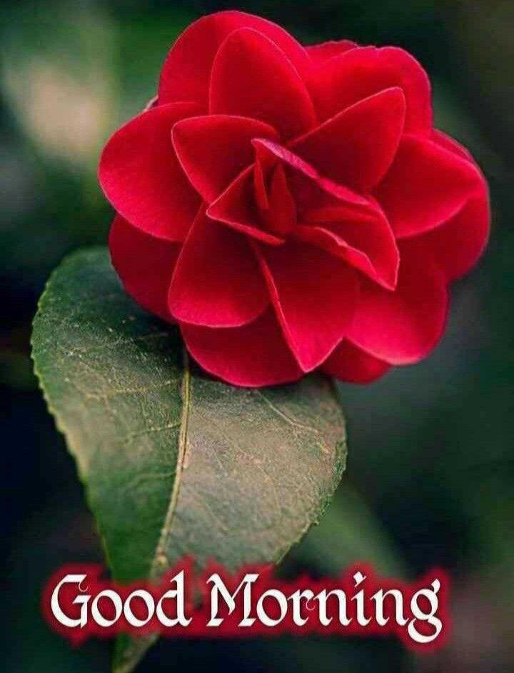 Pin By Ramchai Chuenbumrung On Good Morning Photos In 2020 Good Morning Flowers Good Morning Greetings Good Morning Quotes