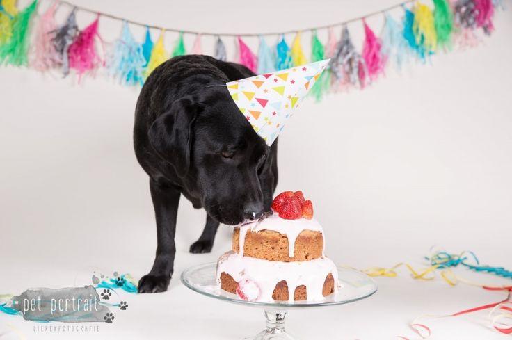 Verjaardag Labrador Juno - 3 jaar - Doggy Cakesmash-9