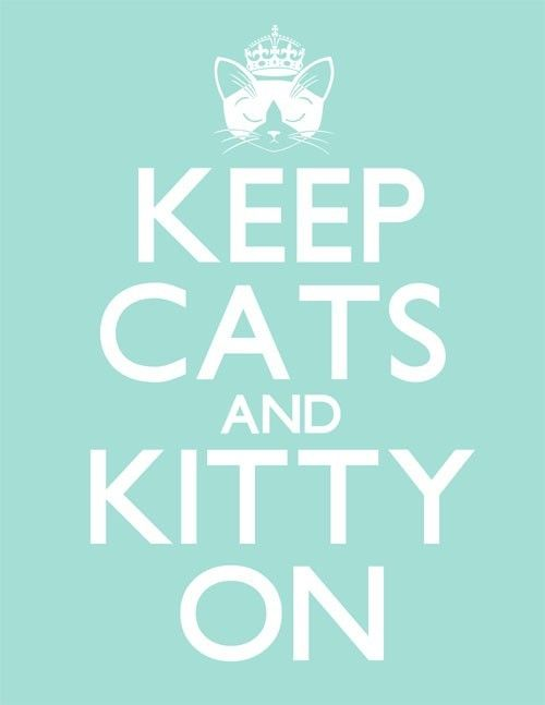 Keep Cats and Kitty On
