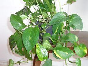 Descubre el mejor truco para que tus plantas recuperen su belleza natural.