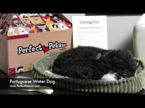 Perfect Petzzz : Portuguese Water Dog - Video