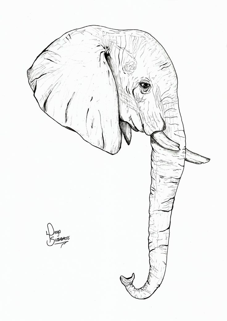elephant face drawing - photo #12