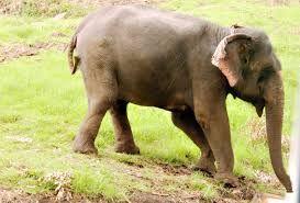Image result for elephant worker