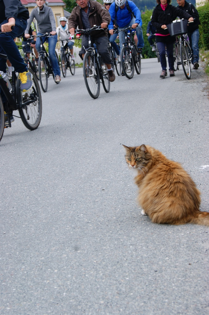 http://swearme.blogspot.fi/   #photography #cat    All time favourite. Garfield that owns the street, biatches! Won't move even if a large group of bikers run by.  ©Marika Lindström