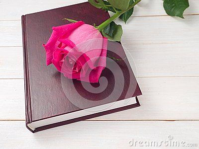 Pink rose on the book