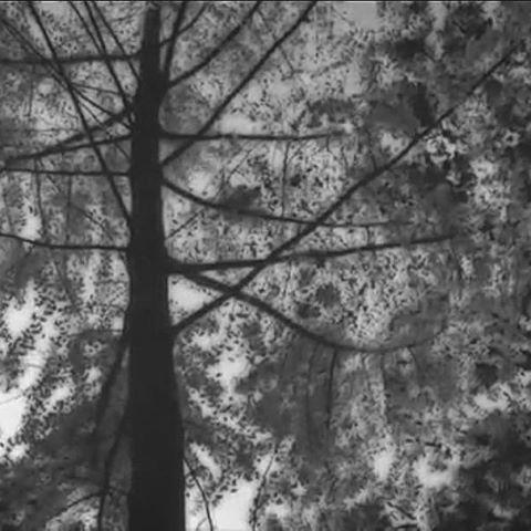 【lucio30986】さんのInstagramをピンしています。 《#music#movie#album#CD#original#earth#Planet#film#asia#trip#sky#森#アジア#song#singer#songwriter#space#guitar#tokyo#曲#音楽#地球#映像#空#旅#製作#ギター#弾き語り#自然#garden_records》